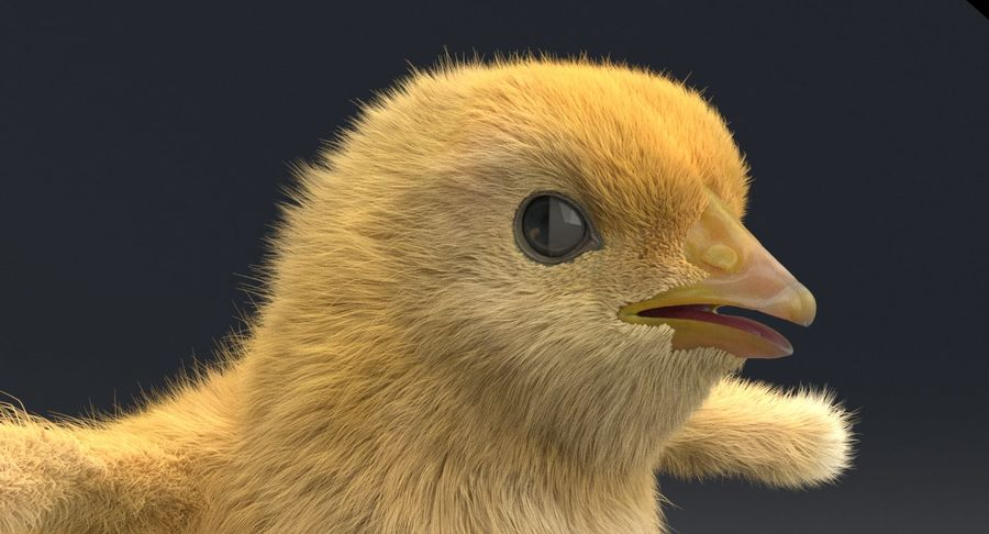 Chick royalty-free 3d model - Preview no. 8
