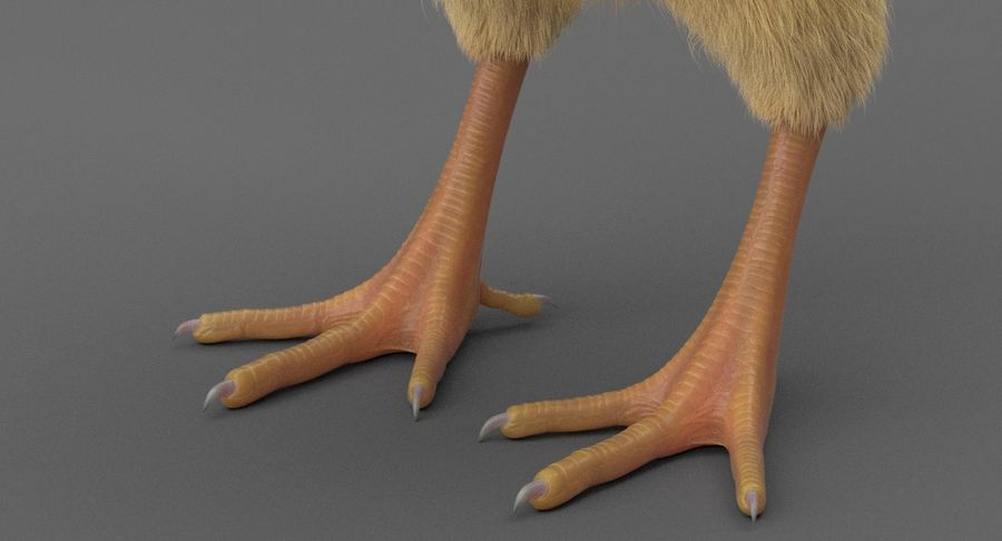 Chick royalty-free 3d model - Preview no. 10