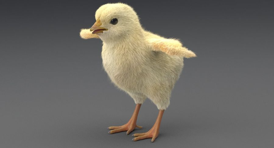Chick royalty-free 3d model - Preview no. 26