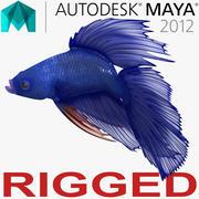 Синяя Бетта Рыба, Подстроенная для Майя 3d model