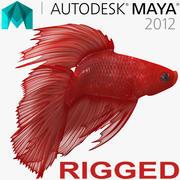 マヤのために赤い冠尾Bettaの魚 3d model