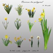 Kwiat Narcyz 3D niski wielokątny 3d model