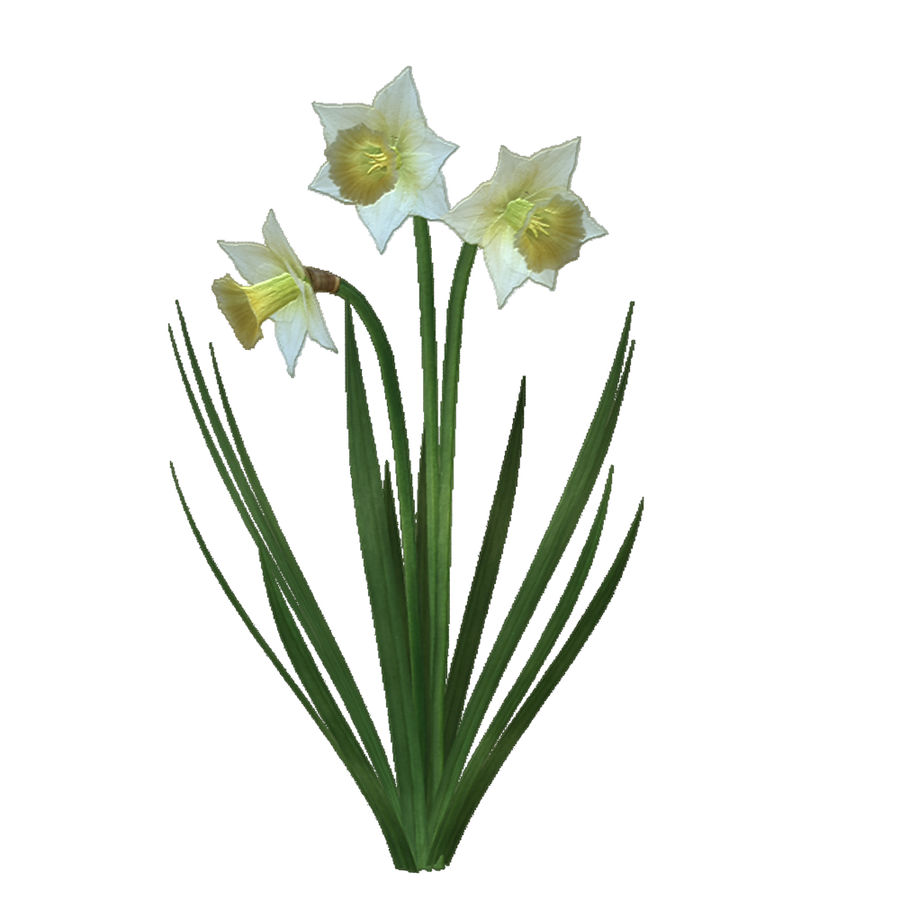 Fleur Narcisse 3D basse polygonale royalty-free 3d model - Preview no. 7