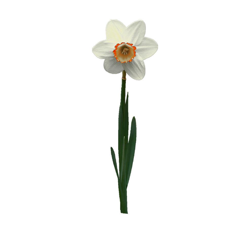 Fleur Narcisse 3D basse polygonale royalty-free 3d model - Preview no. 12