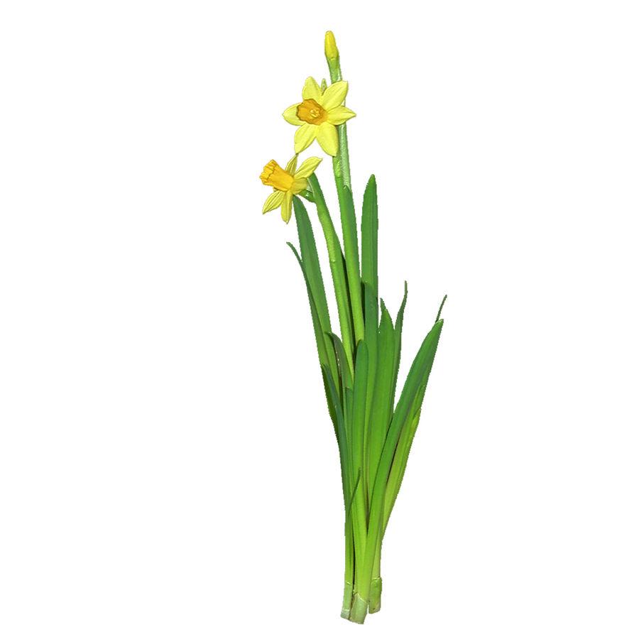 Fleur Narcisse 3D basse polygonale royalty-free 3d model - Preview no. 9