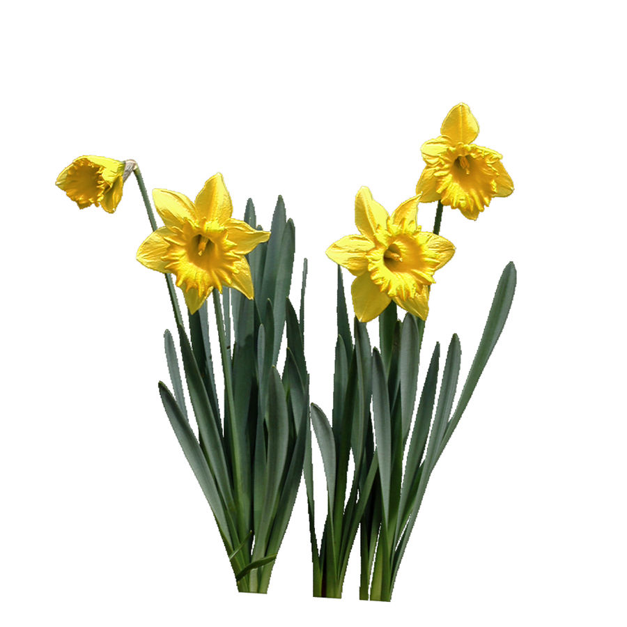 Fleur Narcisse 3D basse polygonale royalty-free 3d model - Preview no. 4
