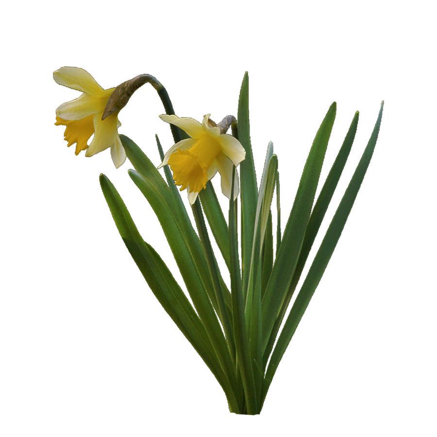 Fleur Narcisse 3D basse polygonale royalty-free 3d model - Preview no. 2