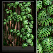 Vertical gardening Monstera 3d model