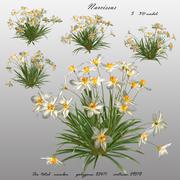 Narciso flor 3D 3d model