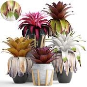 Tropiska växter buskar Bromelia 3d model