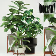 Plants collection 74 Modernica pots 3d model