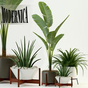 Plants collection 76 Modernica pots 3d model