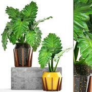 Tropikal bitki çalıları 3d model