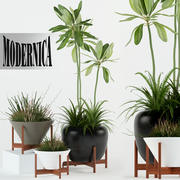 Plants collection 77 Modernica pots 3d model