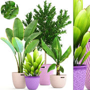 식물 수집 3d model