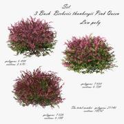 Bush Berberis thunbergii Pink Queen modello 3D 3d model