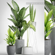 piante impostate 155 3d model