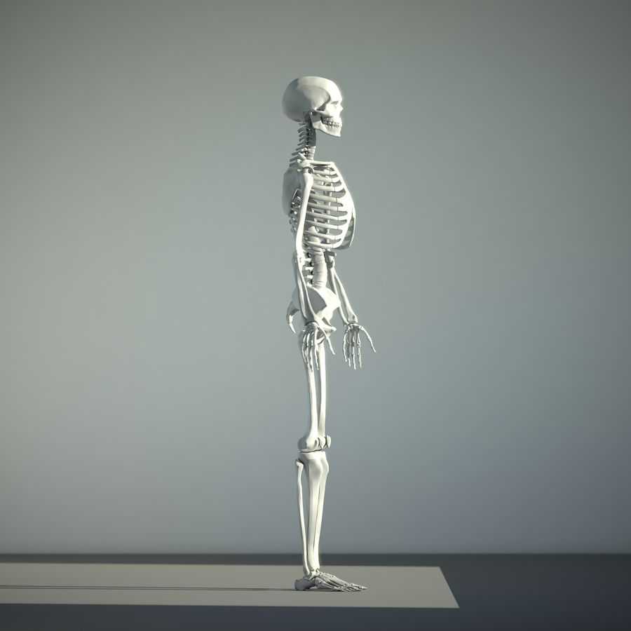 Mänskligt skelett royalty-free 3d model - Preview no. 2