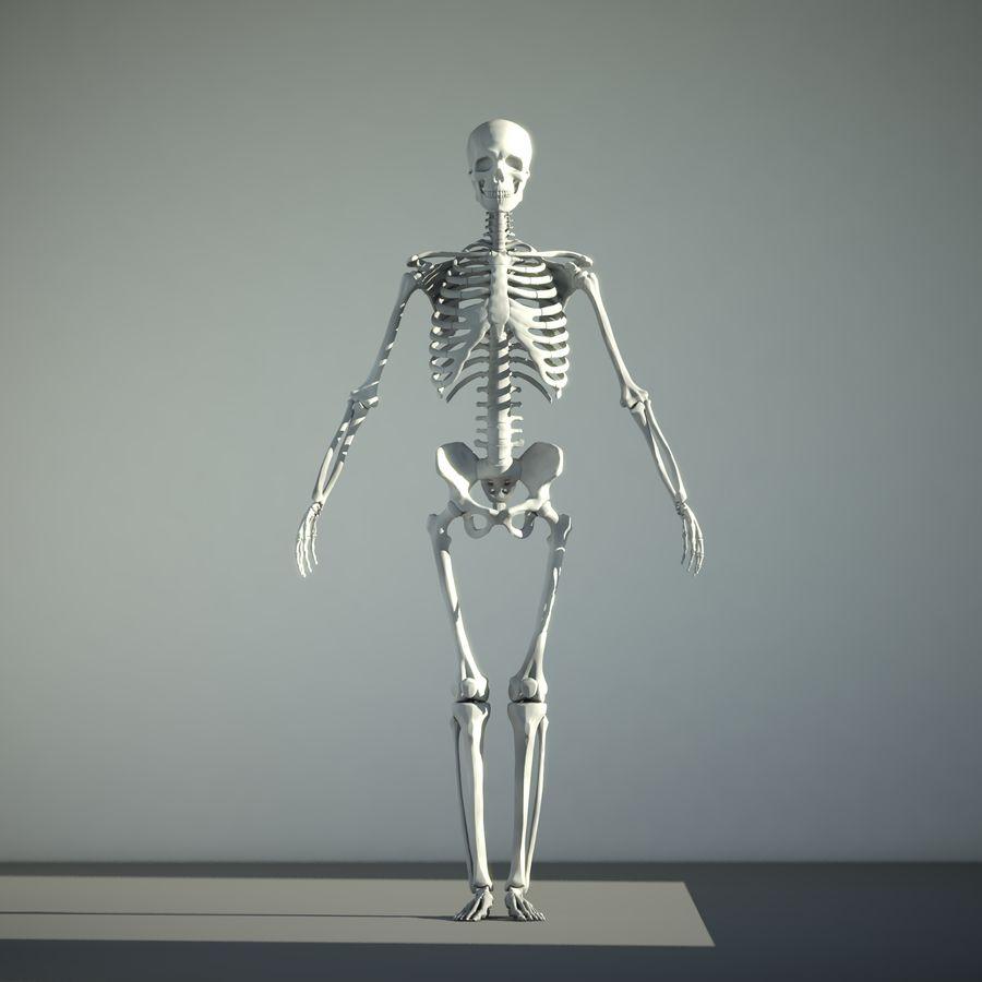 Mänskligt skelett royalty-free 3d model - Preview no. 1