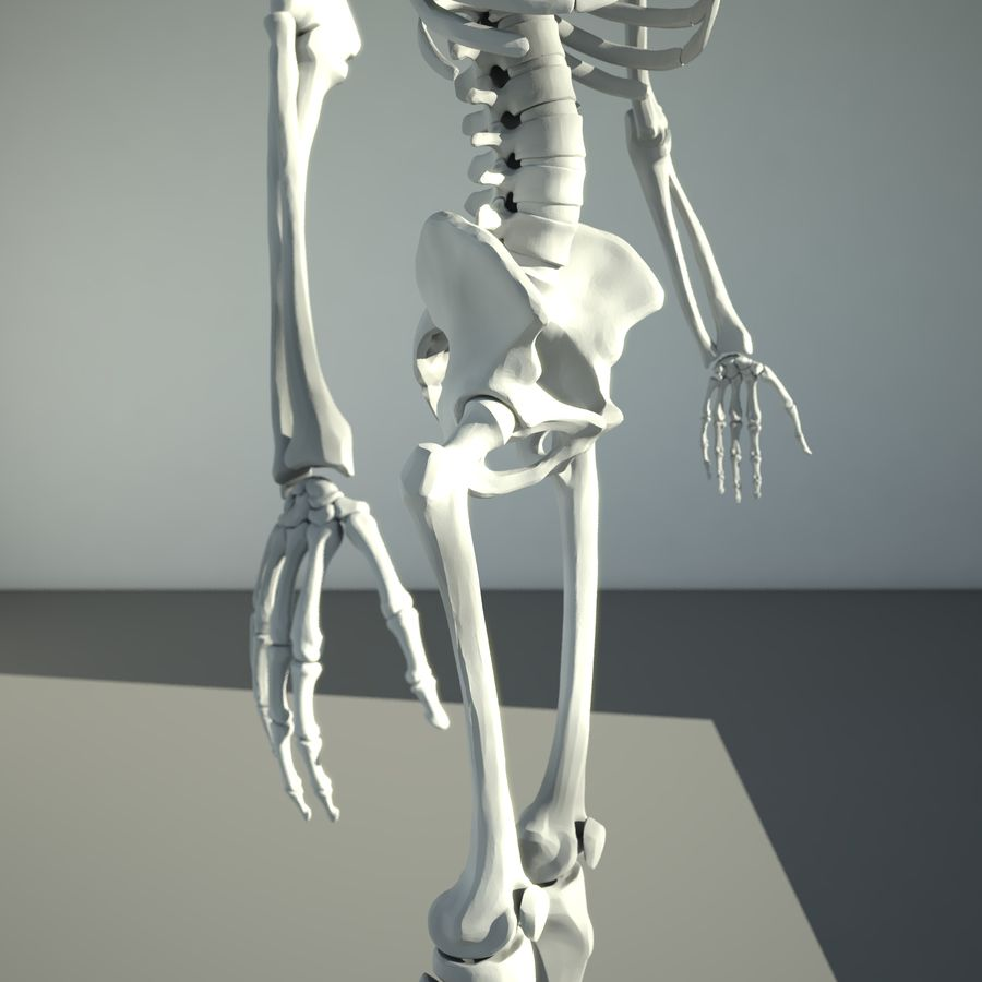 Mänskligt skelett royalty-free 3d model - Preview no. 6
