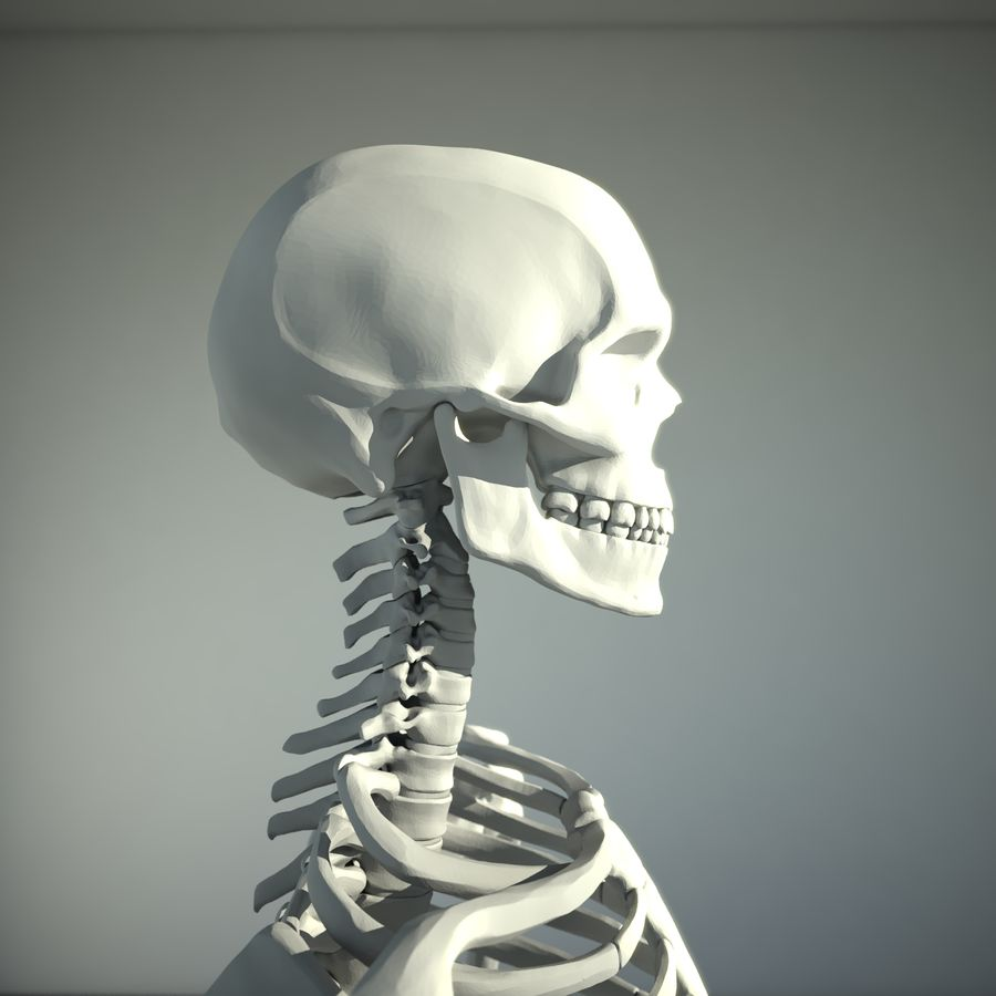Mänskligt skelett royalty-free 3d model - Preview no. 5