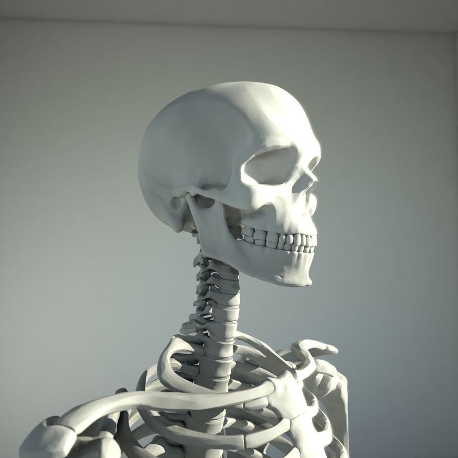 Mänskligt skelett royalty-free 3d model - Preview no. 4