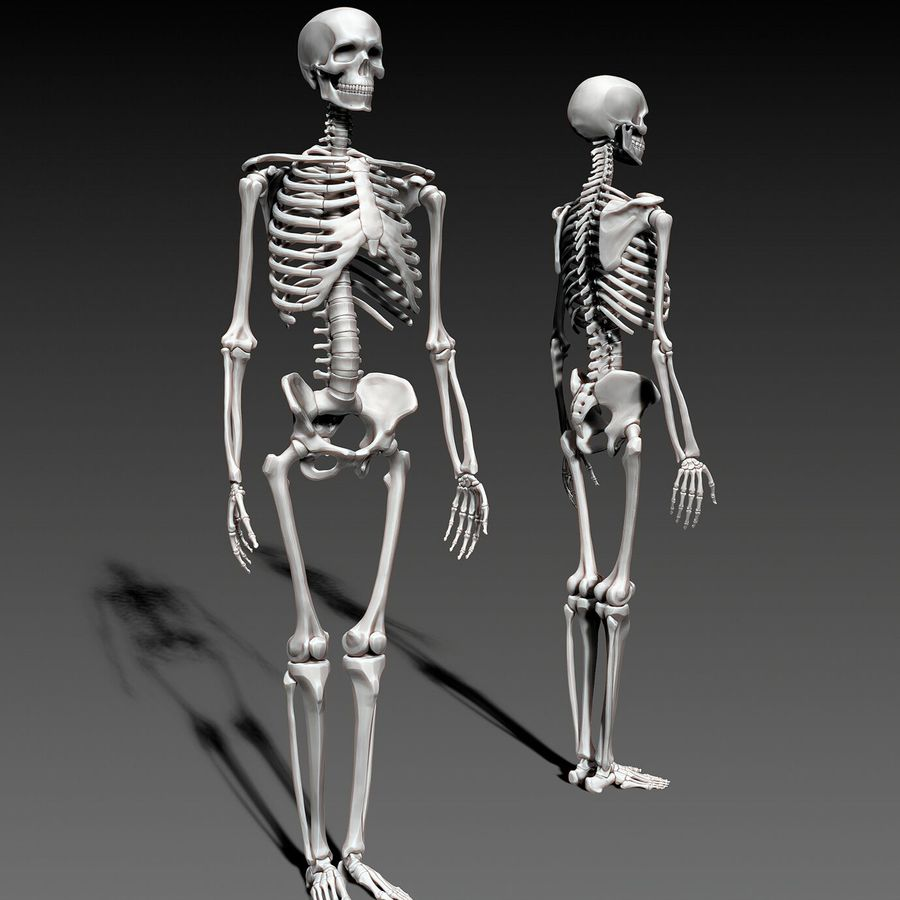 Mänskligt skelett royalty-free 3d model - Preview no. 8