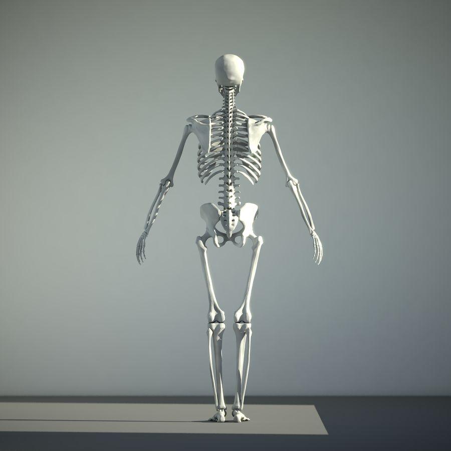 Mänskligt skelett royalty-free 3d model - Preview no. 3