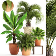 Samling växter 3d model