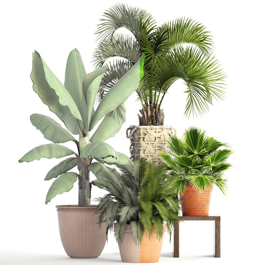 Plantes de collecte royalty-free 3d model - Preview no. 8