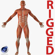 Anatomy Male Muscular System Rigged pour Cinema 4D 3d model