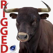 Bull opgetuigd voor Cinema 4D 3d model