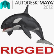 Killer Whale Rigged för Maya 3d model