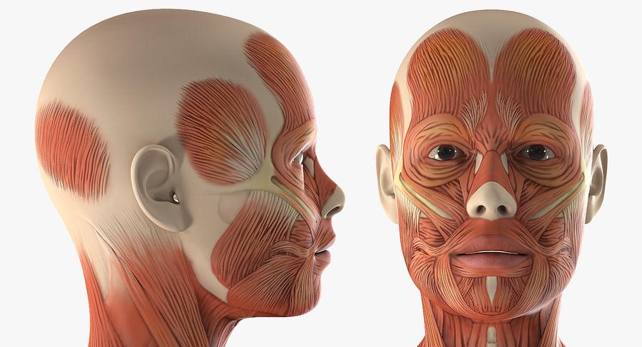 Anatomie du système musculaire féminin royalty-free 3d model - Preview no. 10