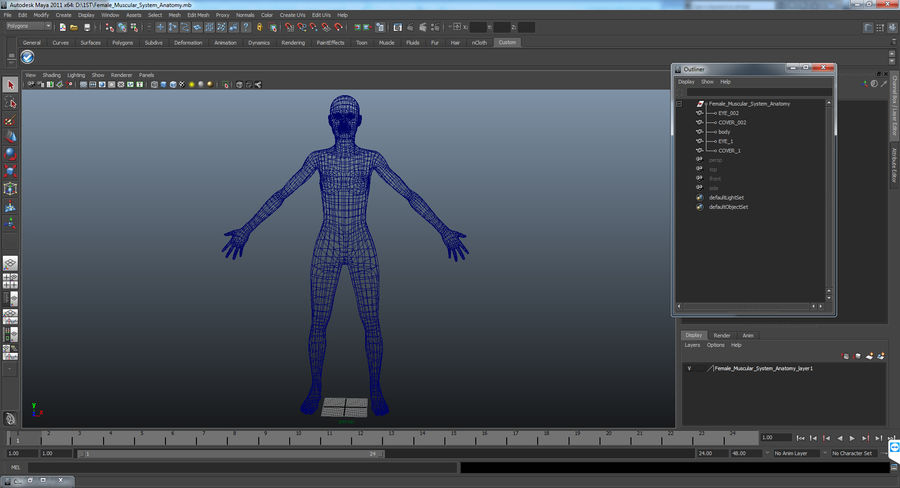 Anatomie du système musculaire féminin royalty-free 3d model - Preview no. 17