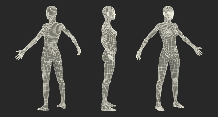 Anatomie du système musculaire féminin royalty-free 3d model - Preview no. 19