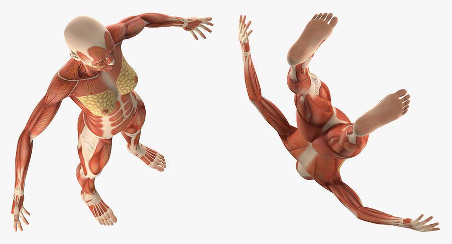 Anatomie du système musculaire féminin royalty-free 3d model - Preview no. 5