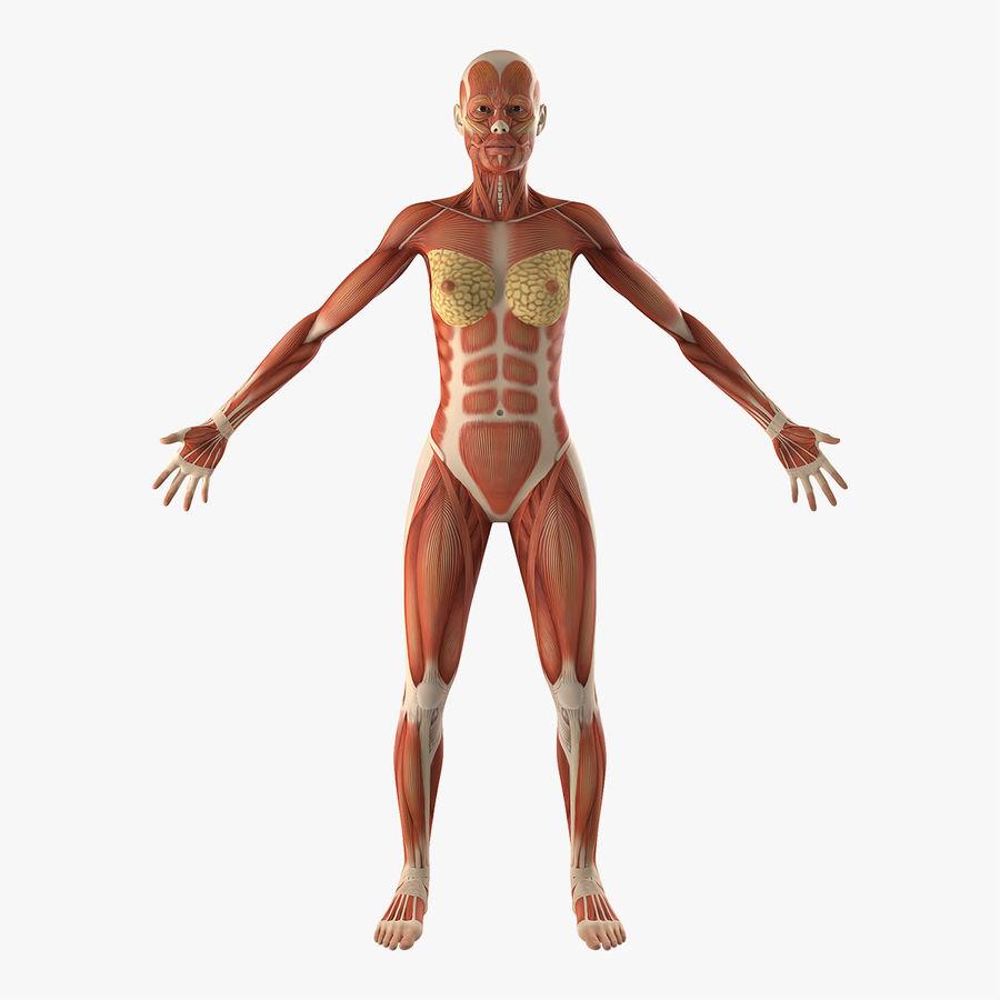 Anatomie du système musculaire féminin royalty-free 3d model - Preview no. 1