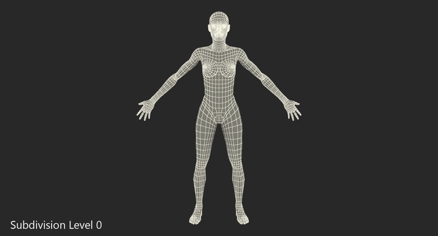 Anatomie du système musculaire féminin royalty-free 3d model - Preview no. 12