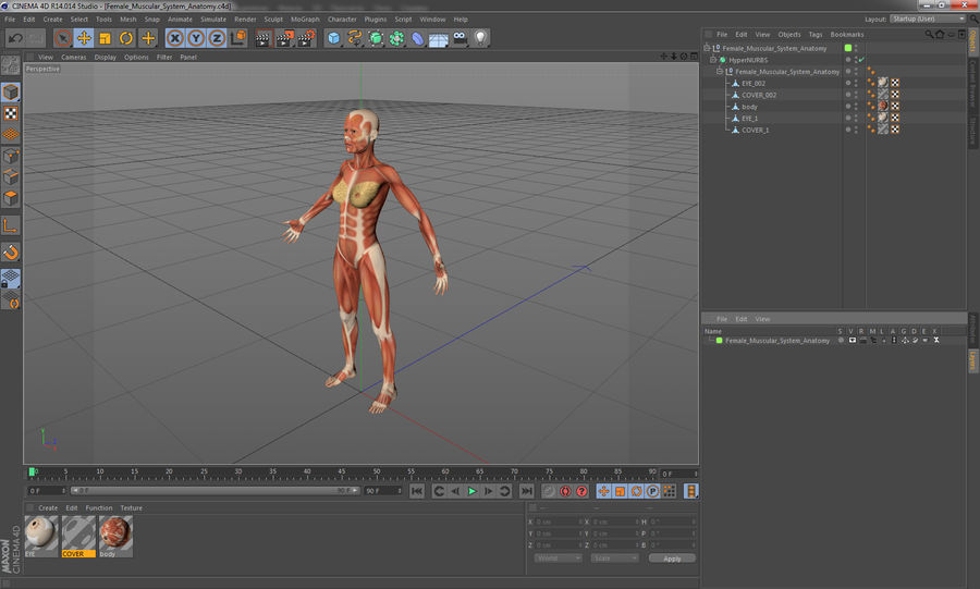 Anatomie du système musculaire féminin royalty-free 3d model - Preview no. 18