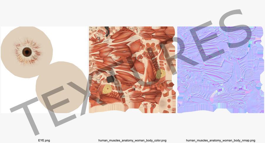 Anatomie du système musculaire féminin royalty-free 3d model - Preview no. 15