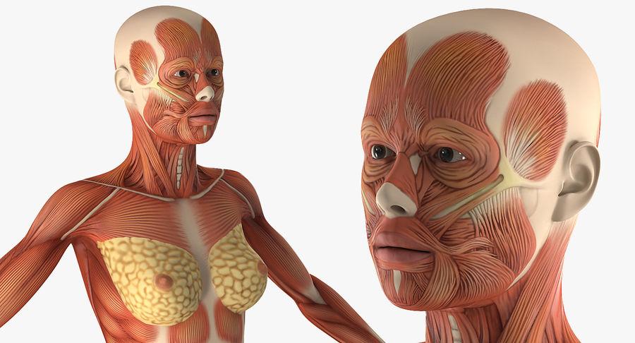 Anatomie du système musculaire féminin royalty-free 3d model - Preview no. 8