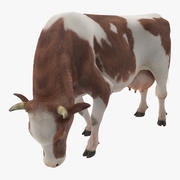 Postura de comer vaca Holstein con piel Modelo 3D modelo 3d