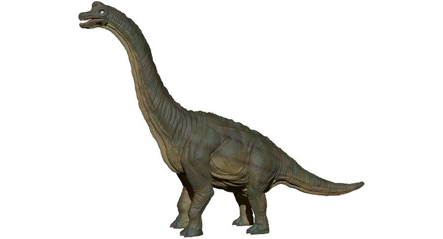 Braquiosaurio royalty-free modelo 3d - Preview no. 21