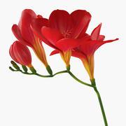Czerwony kwiat frezji 3d model