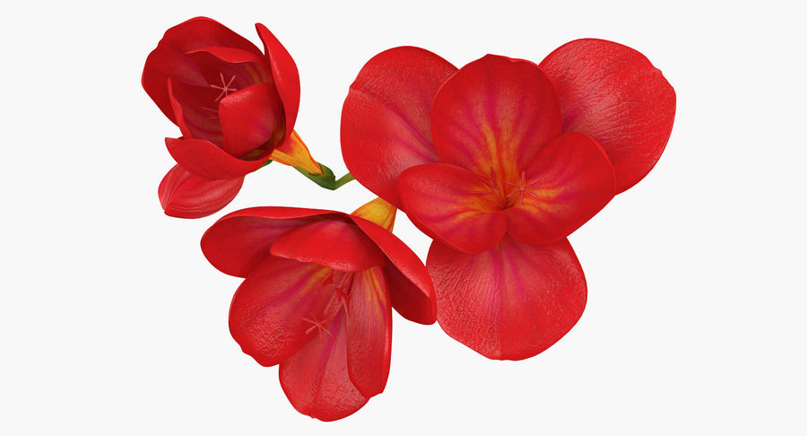 Red Freesia Flower royalty-free 3d model - Preview no. 4