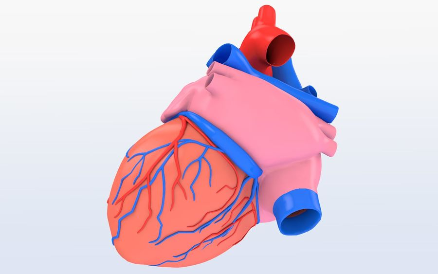 Human heart Anatomy royalty-free 3d model - Preview no. 7