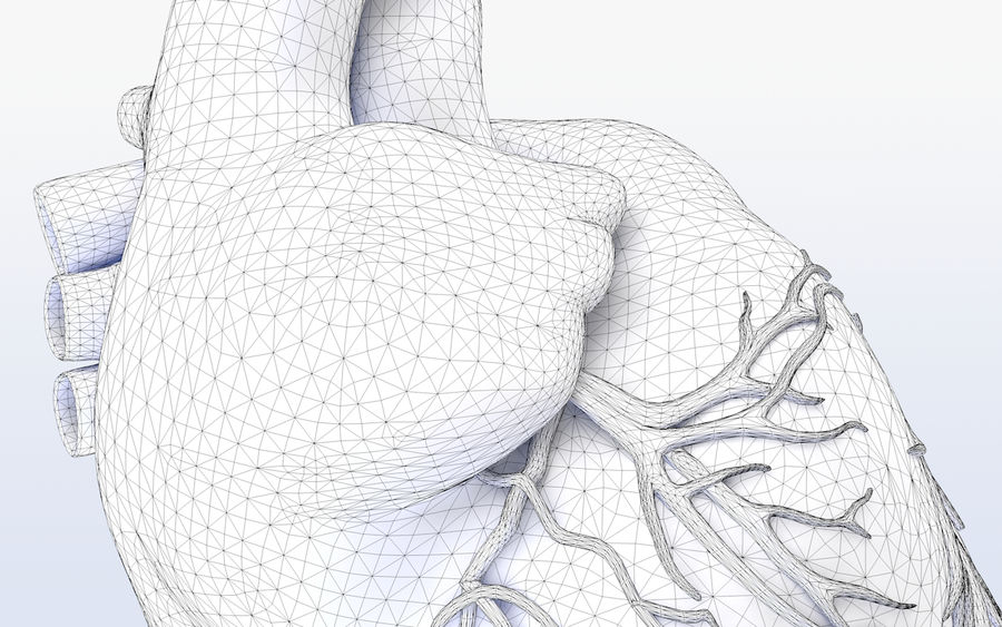 Human heart Anatomy royalty-free 3d model - Preview no. 10