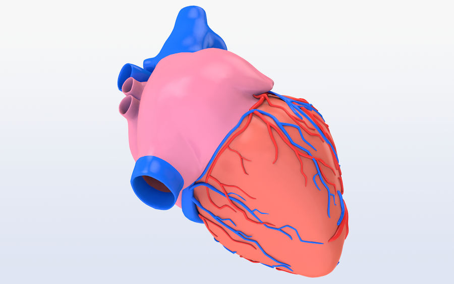 Human heart Anatomy royalty-free 3d model - Preview no. 6