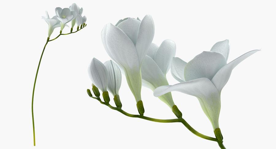 White freesia flower 3d model 39 x obj fbx c4d 3ds white freesia flower royalty free 3d model preview no 3 mightylinksfo